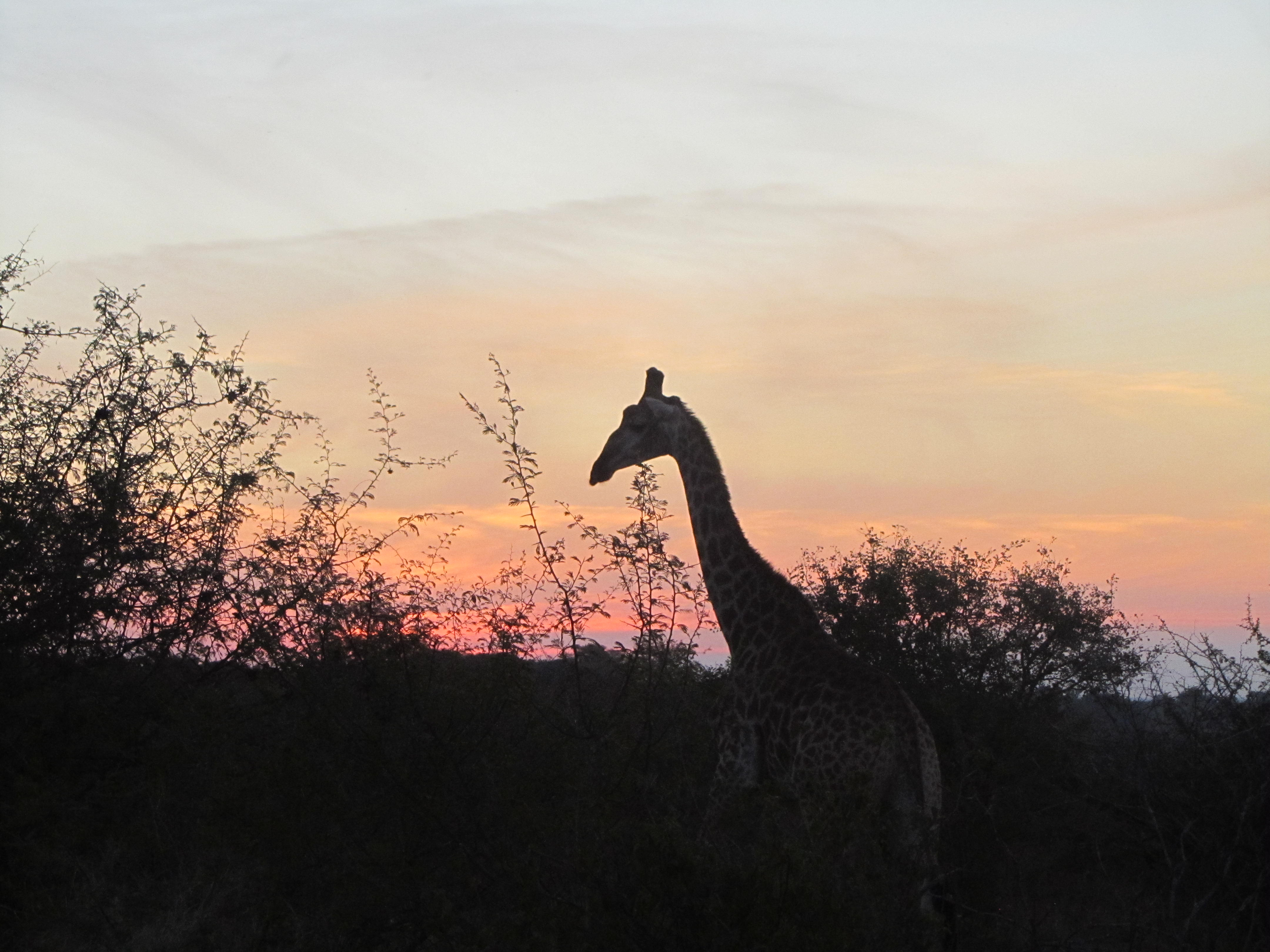 Sunrise and Sunsets in the Kruger Park